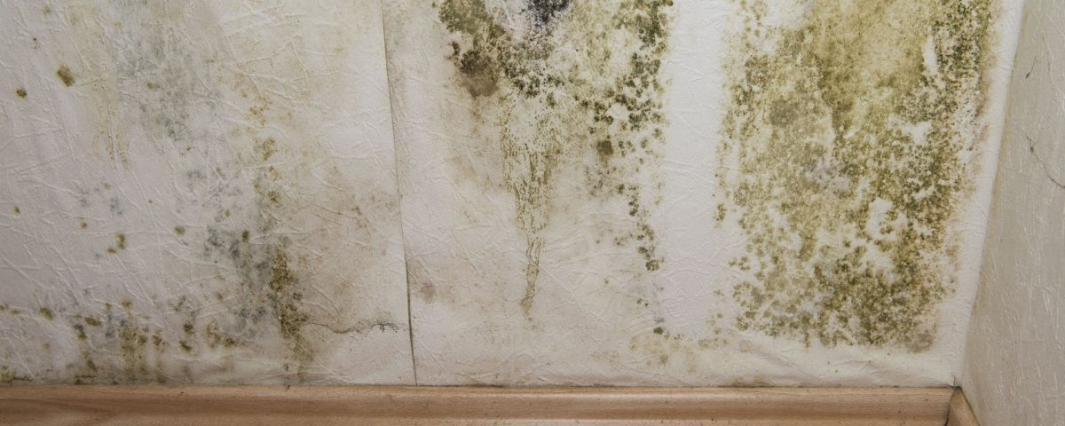 Mold remediation why should a professional remove mold disaster mold remediation why should a professional remove mold disaster cleanup services water damage restoration in denver co solutioingenieria Choice Image