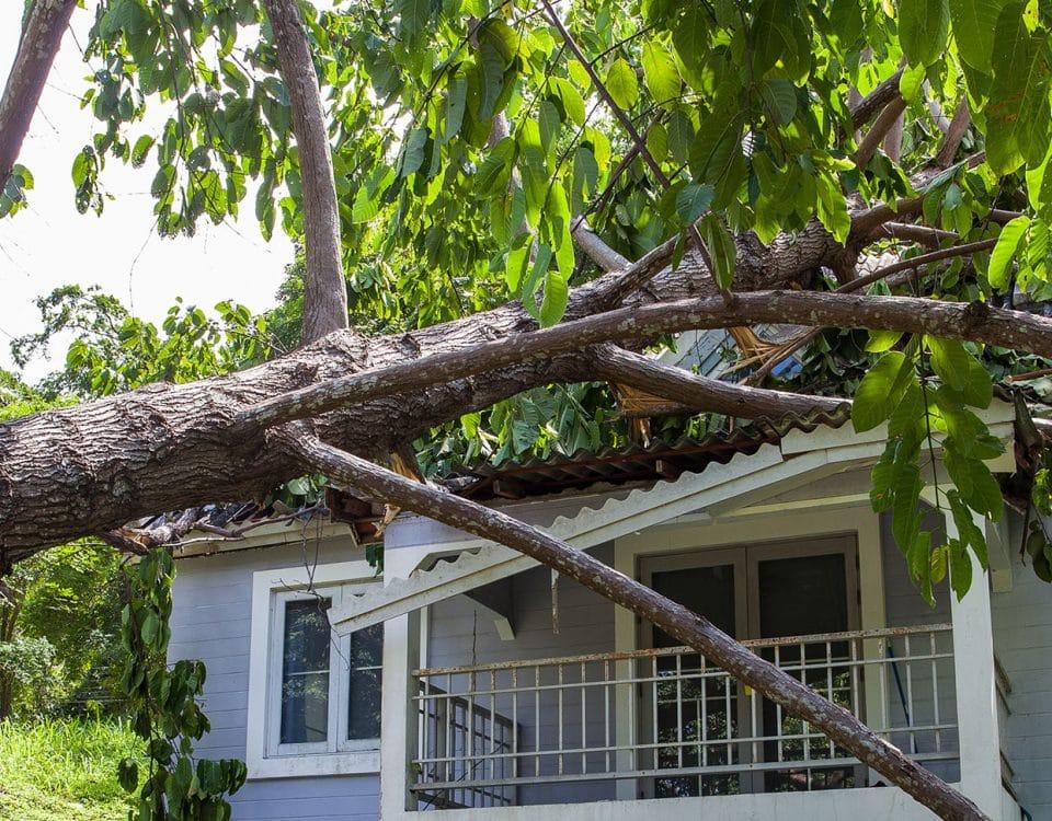 Tree fallen on home