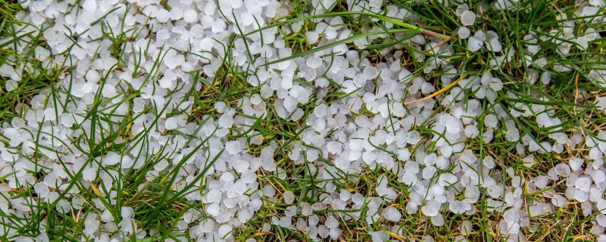 Hailstones on grass