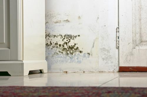 Mold damage found in home in Colorado